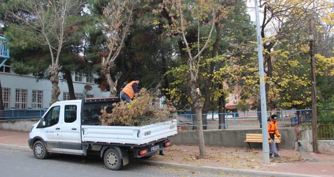 Ağaçlar Budanmaya Başlandı