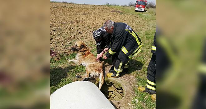 Su Kuyusuna Düşen Köpeği İtfaiye Kurtardı