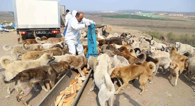 Edirne'de sokak hayvanlarına yiyecek takviyesi