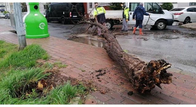 Kırklareli'de rüzgar ağaçları devirdi