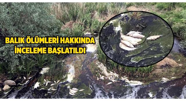Tekirdağ'da deredeki balık ölümleri incelemeye alındı