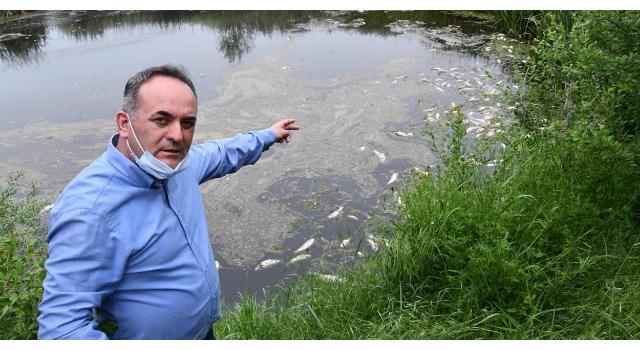 Tekirdağ'ın Karakarlı Deresi'ndeki balık ölümleri endişelendiriyor