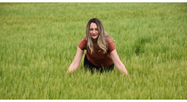 Türkiye'nin 2020 buğday hedefi, 20 milyon ton