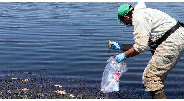 Tekirdağ'daki Kırkkepenkli Göleti'nde balık ölümleri