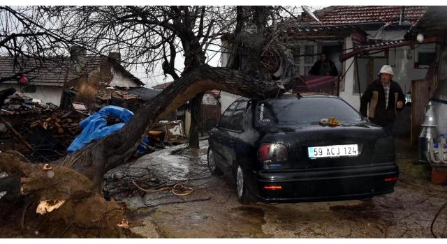Şarköy'de fırtına ağaçları devirdi