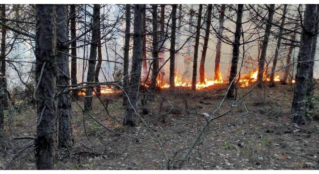 Tekirdağ'da orman yangını; 5 noktada çıktı