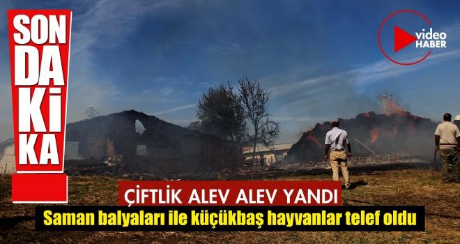 Malkara'da Çiftlik Alev Alev Yandı