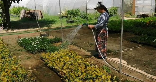 Kendi Seralarında Kendi Çiçeklerini Üretiyorlar