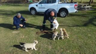 Büyükşehir Belediyesi Sahipsiz Sokak Hayvanlarına Beslenme Desteği Veriyor