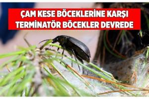Terminatör böcekler ormana salındı