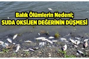 Barajdaki balık ölümlerinin nedeni; Sudaki oksijen değerinin düşmesi