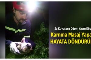 Su kuyusuna düşen yavru köpek, masajla hayata döndürüldü
