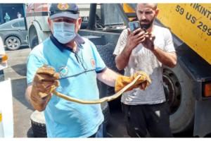 Kamyonun lastiğinde sıkışan yılanı itfaiye kurtardı
