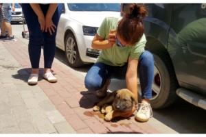 Otomobilin çarptığı yavru köpeğe hayvanseverler sahip çıktı