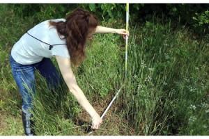 Trakya'da, 'kırmızı orman karıncası' eylem planı
