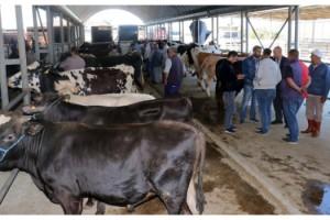 Keşan'da, kurban pazarında hareketlilik başladı