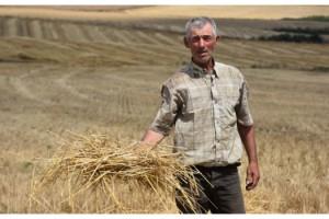 Kuraklığın vurduğu Trakya'nın çiftçisini 'taban fiyat' kurtardı