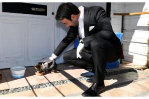 Beşiktaş'ta evcil hayvan ticareti yasaklanıyor