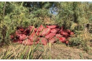 Yunanistan'a götürülmek istenen 5 ton midye ele geçirildi