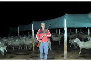 Kurtlar köylere inip, hayvanlarına saldırınca tüfekle nöbete başladılar