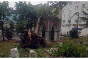 Tekirdağ'da hortum ağaçları devirdi, çatıları uçurdu