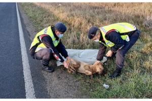 Otomobilin çarptığı köpeğe jandarma sahip çıktı