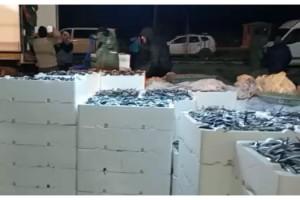 Tekirdağlı balıkçılar, İğneada'da 200 ton hamsi yakaladı