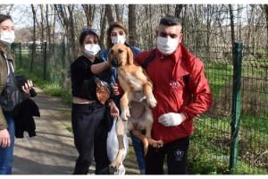Hasta sokak köpeğine üniversiteli öğrenciler sahip çıktı