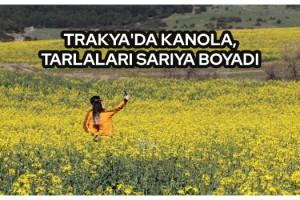 Trakya'da kanola, tarlaları sarıya boyadı