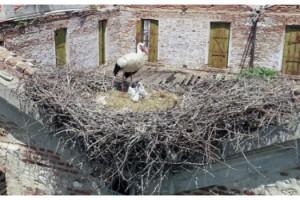Edirne'de tarihi yapılar, leyleklere yuva oldu