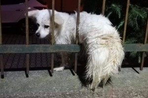 Demir parmaklıklara sıkışan köpeği itfaiyeciler kurtardı