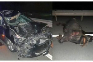 Mandaya çarpan otomobil hurdaya döndü; baba-kız yaralandı