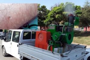 Edirne'de dantel böceğine karşı ilaçlama