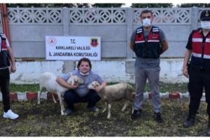 Kırklareli'de jandarmadan hayvan hırsızlığı uyarısı