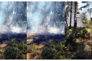 Malkara'daki orman yangınında sabotaj şüphesi