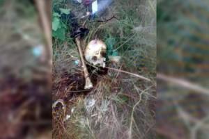 Tekirdağ'da piknik alanında bulunan kafatası ve kemiklere inceleme